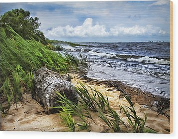Driftwood By The Sea Wood Print