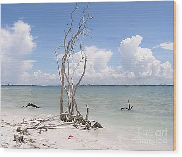 Wood Print featuring the photograph Driftwood by Carol  Bradley