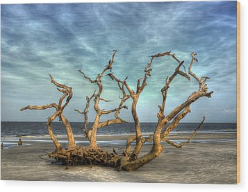 Driftwood Grove Wood Print by Greg and Chrystal Mimbs