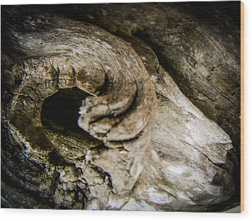 Driftwood Ram Wood Print by Christy Usilton