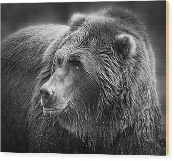 Drinking Grizzly Bear Black And White Wood Print by Steve McKinzie