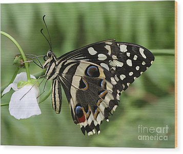 Drinks With A Giant  Swallowtail Wood Print by Ruth Jolly