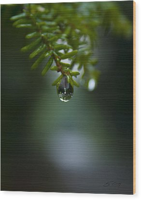 Drop Of Life In The Woods Wood Print