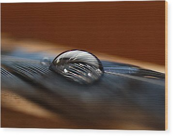 Drop On A Bluejay Feather Wood Print by Susan Capuano