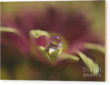 Drop On Petal Wood Print