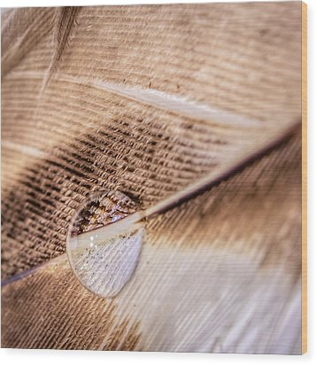Wood Print featuring the photograph Droplet On A Quill by Rob Sellers