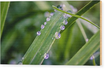 Drops On Grass Wood Print