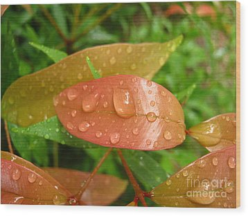 Wood Print featuring the photograph Drops On Leave by Michelle Meenawong