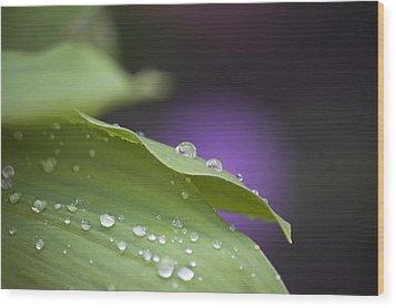 Drops Wood Print by Thomas Glover