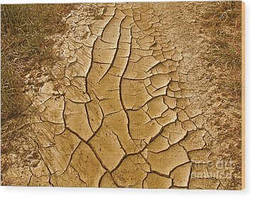 Dry Lands Wood Print by Boon Mee