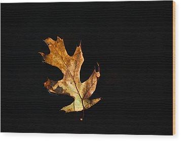 Dry On Water Wood Print by Karol Livote