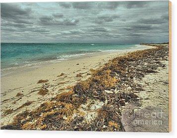 Dry Tortugas Beach Wood Print by Adam Jewell