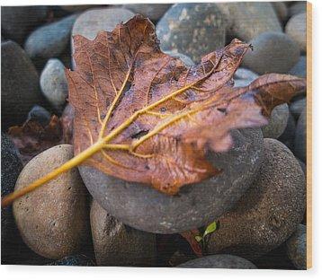 Drying Leaf Wood Print by Mike Lee