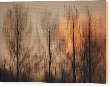 Wood Print featuring the photograph Drying Wet by Lorenzo Cassina