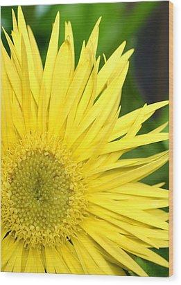 Dsc300d-002 Wood Print by Kimberlie Gerner