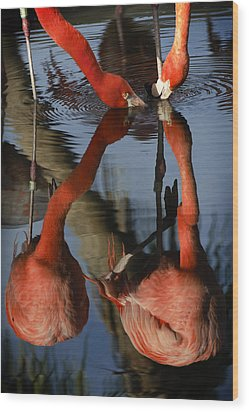 Dual Flamingo Reflections Wood Print by Dave Dilli