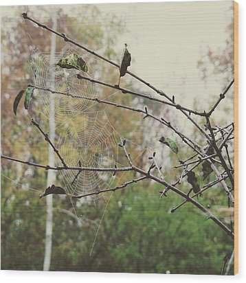 Wood Print featuring the photograph Dual Webs by Nikki McInnes