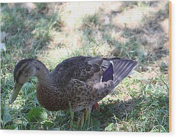 Duck - Animal - 011320 Wood Print by DC Photographer