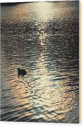 Duck At Sunset Wood Print