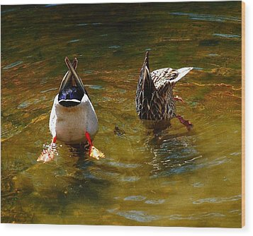 Duck Butts Wood Print by Steven Reed