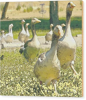 Duck Duck Goose Wood Print by Artist and Photographer Laura Wrede