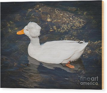 White Crested Duck Wood Print by Ernest Puglisi