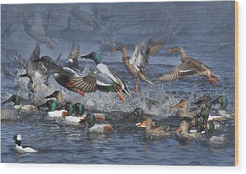 Duck Frenzy Wood Print by Angie Vogel