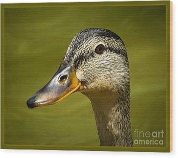 Duck Protrait Wood Print by Brenda Bostic