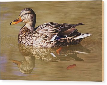 Duck Reflection Wood Print by Paulette Thomas