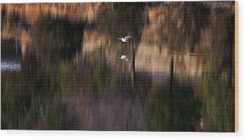 Duck Scape 2 Wood Print