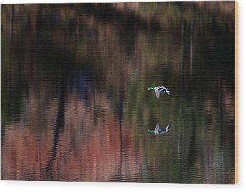 Duck Scape 3 Wood Print