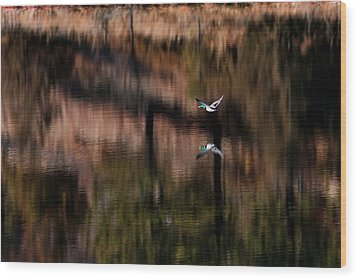 Duck Scape Wood Print