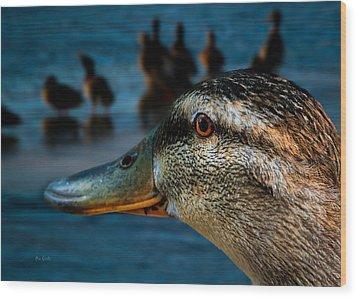 Duck Watching Ducks Wood Print by Bob Orsillo