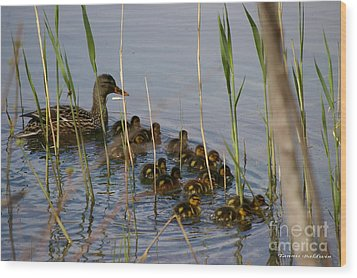 Ducklings And Mom Wood Print by Tannis  Baldwin