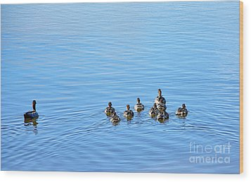 Ducklings Day Out Wood Print by Kaye Menner