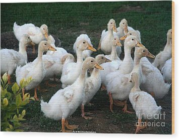 Ducklings In Clay Center Kansas Wood Print by PainterArtist FIN
