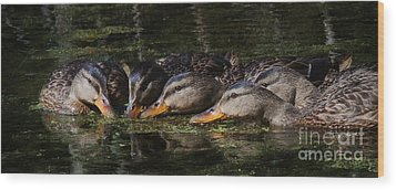 Wood Print featuring the photograph Ducks In A Row by Jan Piller