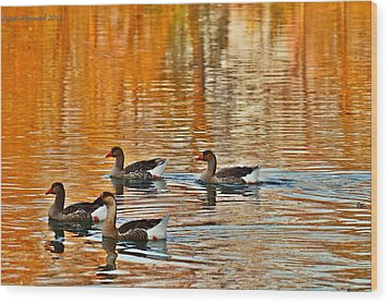 Wood Print featuring the photograph Ducks In The Fall by Lynn Hopwood