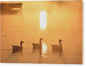 Ducks On A Foggy Lake At Sunrise Wood Print
