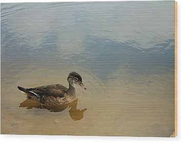 Ducky Two Wood Print