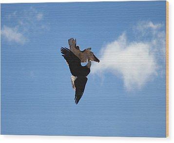 Duelling Raptors Wood Print