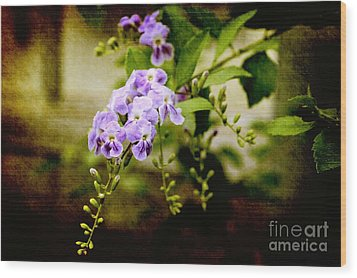 Duranta Bush Wood Print by Rosemary Aubut