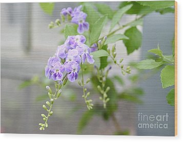 Duranta Wood Print by Rosemary Aubut