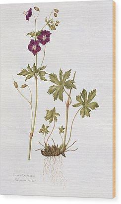 Dusky Cranesbill Wood Print by Diana Everett