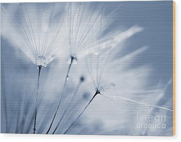 Dusty Blue Dandelion Clock And Water Droplets Wood Print by Natalie Kinnear