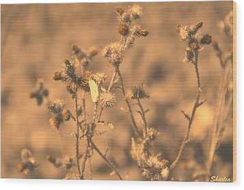 Dusty Desert  Wood Print
