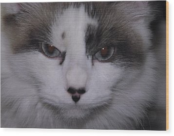 Dusty - The Cat's Meow Wood Print by Robyn Stacey