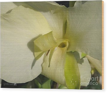 Wood Print featuring the photograph Dwarf Canna Lily Named Ermine by J McCombie