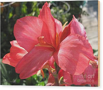 Wood Print featuring the photograph Dwarf Canna Lily Named Shining Pink by J McCombie