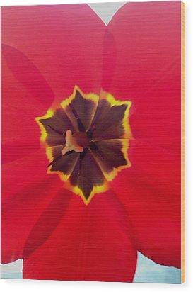 Dying Tulip Wood Print